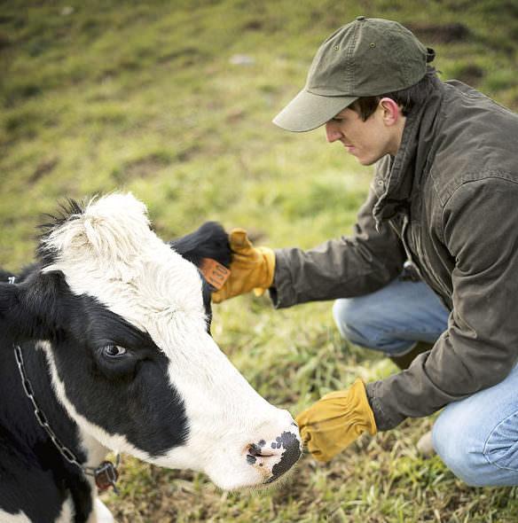 Scannerlösung PACO, Viehhändler scannt Ohrmarke